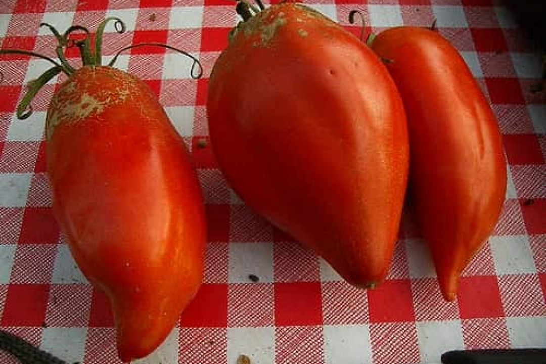 Tomatoes 'Andes Heirloom'