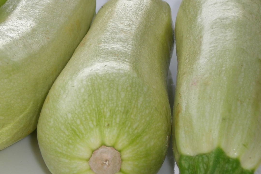 Courgettes 'Blanche d'Egypte'