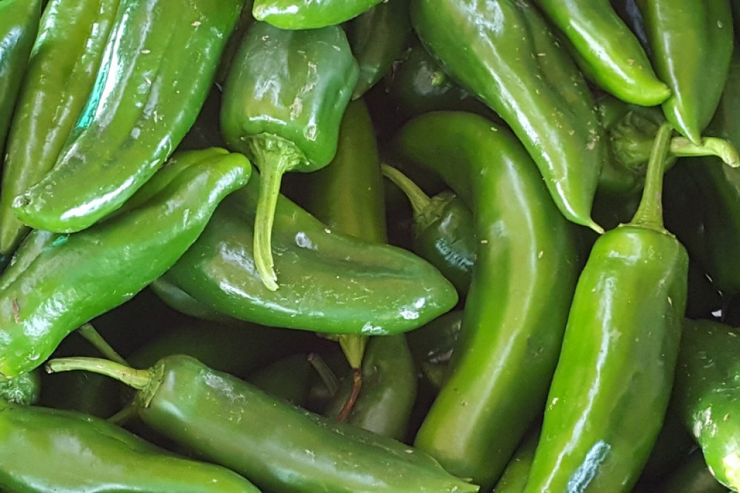 Chili Peppers 'Jalapeno'