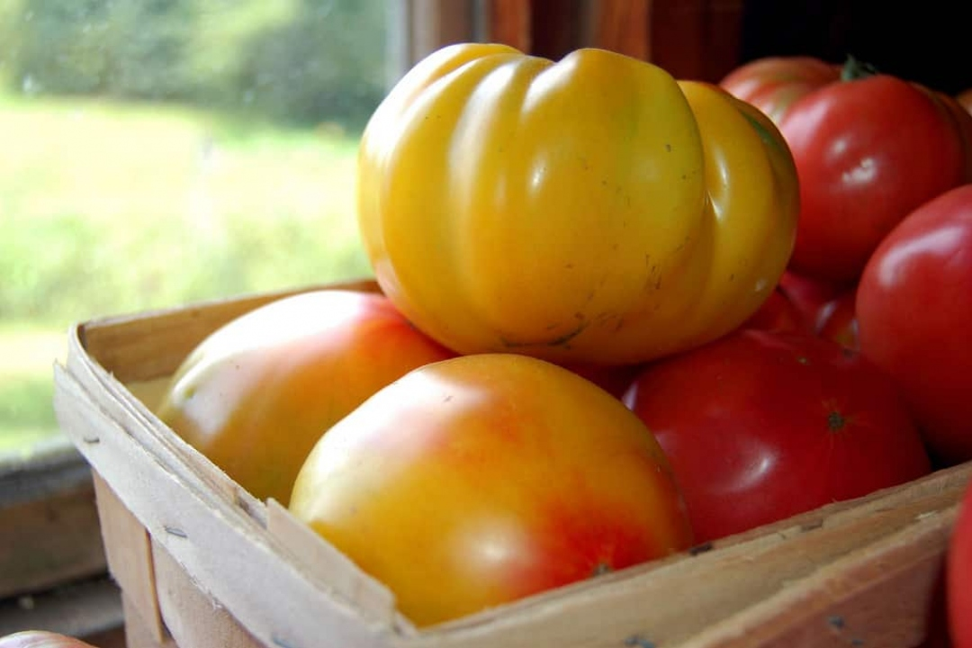 Tomatoes 'Striped German'